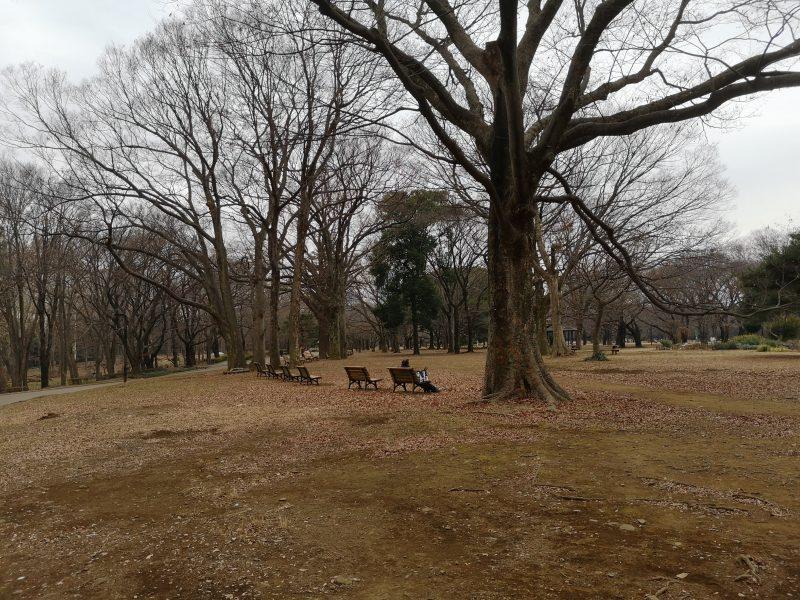 代々木公園 ベンチ2